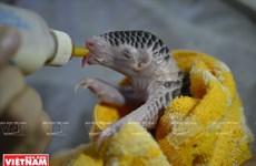 越南野生动物保护成效显著(组图)