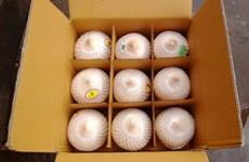 中国是越南椰子的主要出口市场