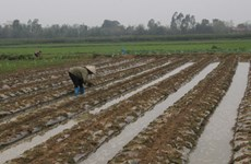 清化省提升合作社经济地位