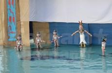越南水上木偶戏亮相中东