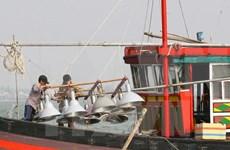 越南广义省渔民继续在传统渔场进行捕捞作业