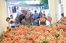 今年越南首批一吨荔枝成功出口美国