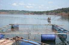 承天顺化省协助渔民稳定恢复生产生活秩序