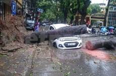 今年第一场台风登陆越南北部各地采取措施开展台风抗灾救灾工作
