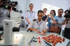 越南驻澳大利亚大使:越南应改变农业生产习惯 满足高端市场的要求