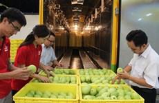 越南芒果获批进军澳大利亚市场