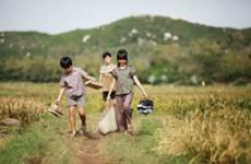 《我看见绿色草地上是金色花朵》将代表越南参加第89届奥斯卡