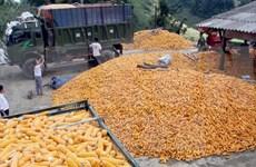 越南暂停进口原产于美国的干玉米酒糟