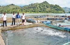 宣光省的经济价值高特产鱼养殖