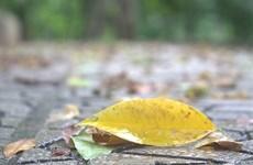 河内之秋色