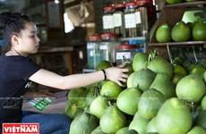 越南南部著名高档品牌——新朝岛蜜柚