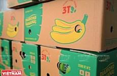 越南兴安省香蕉远销海外
