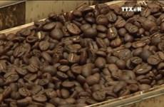 [视频]越南林同省在日本咖啡展览会上推介阿拉比卡咖啡