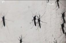 缅甸现首例寨卡病毒感染病例