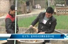 灶王节:富寿省水沉鲤鱼喜获丰收