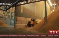 泰国政府计划在2017年清理全部库存大米