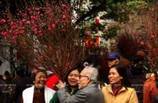 首都河内春节氛围渐浓(组图)