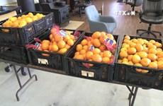 越南橙子对印尼出口前景乐观