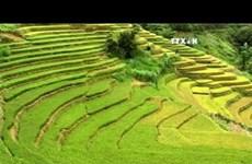 越南安沛省穆庚寨梯田跻身全球五十大最美的旅游景点