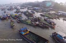 越南像—块巨大的磁铁吸引全球众多游客前来观光游览