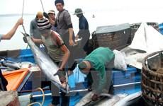富安省力争2017年金枪鱼捕捞产量达5000吨