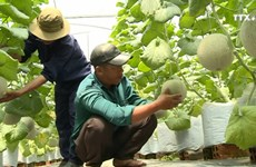 越南农民发扬创新精神 加快融入国际社会步伐