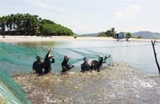 越南虾类产业推行清洁养殖新模式