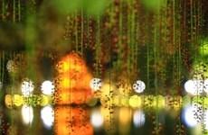 玉蕊花盛开季节(组图)