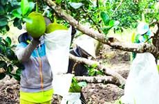 """越南企业积极打造水果""""产加销一条龙""""格局"""