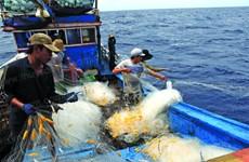 岘港市为渔民们进行合法捕捞作业提供协助