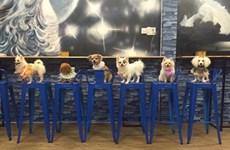 宠物咖啡馆  —— 2018年春节期间爱狗族聚集之地