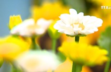 黏土花满足人们的审美情趣