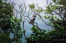 热爱拍摄山茶半岛上白臀叶猴的记者