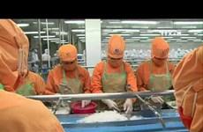 确保越南虾类顺利出口美国   艰难却不退缩
