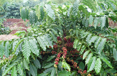格贺族青年成功实现顺天农业创业