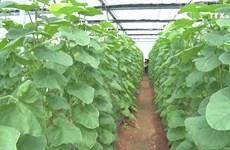 河南省聚集土地发展高科技农业