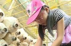 胡志明市力争开发 休闲农业与乡村旅游模式