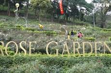 越南最大玫瑰花园——河内居民新颖的春游目的地