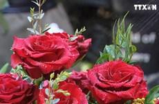 三八国际妇女节:进口的花卉品种受消费者的喜爱