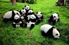 越南与中国四川加强旅游合作