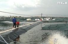 广南省拟定展开白对虾封闭循环式综合养殖模式