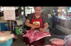 越南积极主动采取措施控制非洲猪瘟疫情蔓延