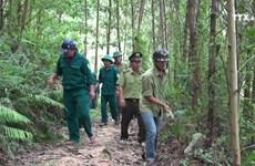 宁平省努力提高森林管理保护工作效果