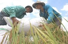 扶贫济困:越南三十年革新开放的成就