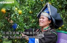 芒姜橘子——西北山区特产