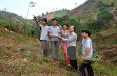 宣光省力争2020年种植1万公顷的用材林