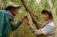 金瓯省两个独特职业行业获列入国家级非物质文化遗产名录