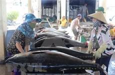 2019年越南金枪鱼出口额增长10.2%