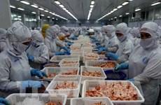 越南要研究对俄罗斯和波兰等新市场进行虾类出口