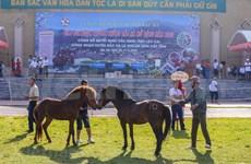 组图:2020年北河传统赛马节吸引了老街省众多骑手携骏马参赛